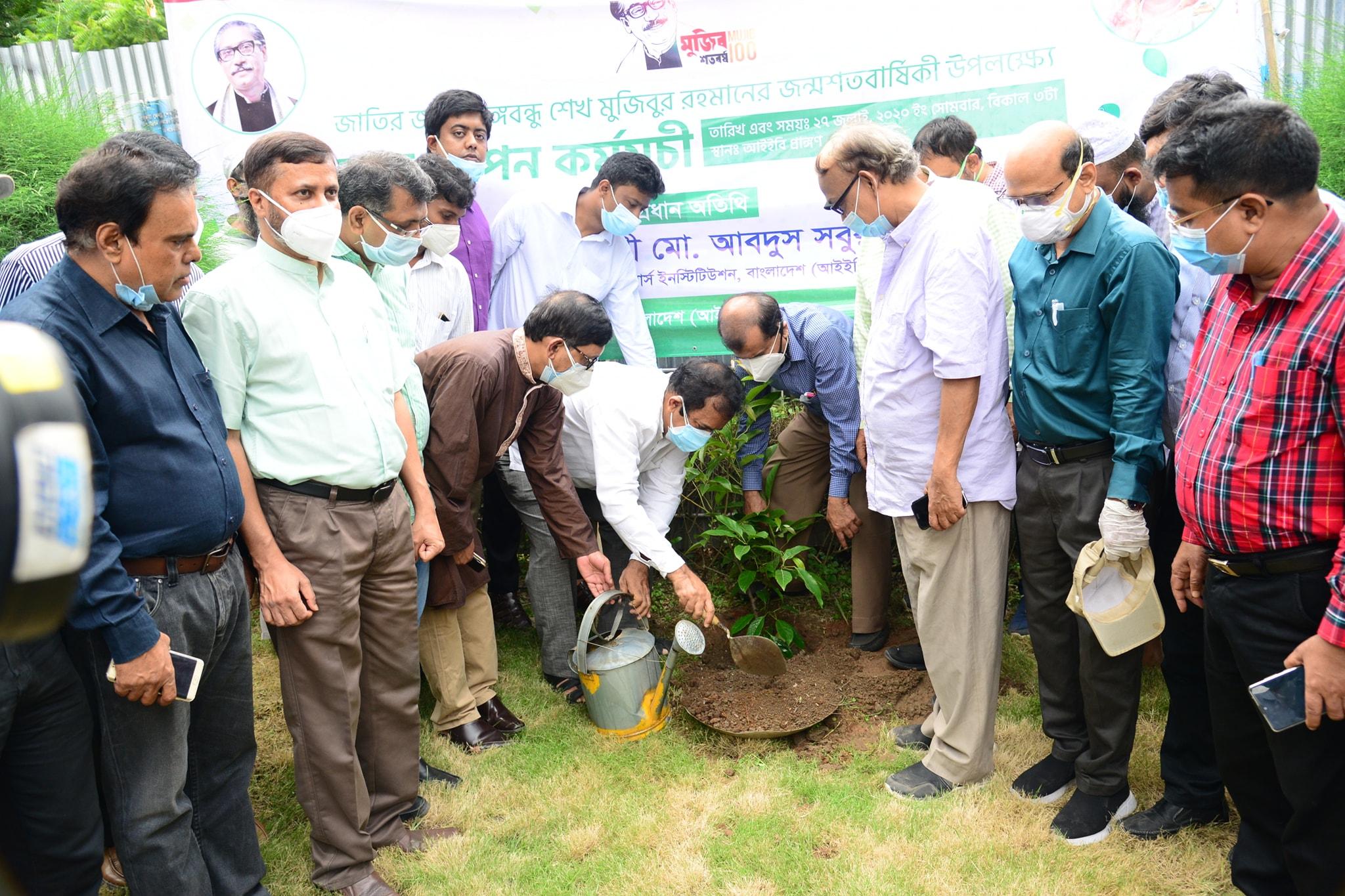 IEB's tree plantation programme marking 'Mujib Year'